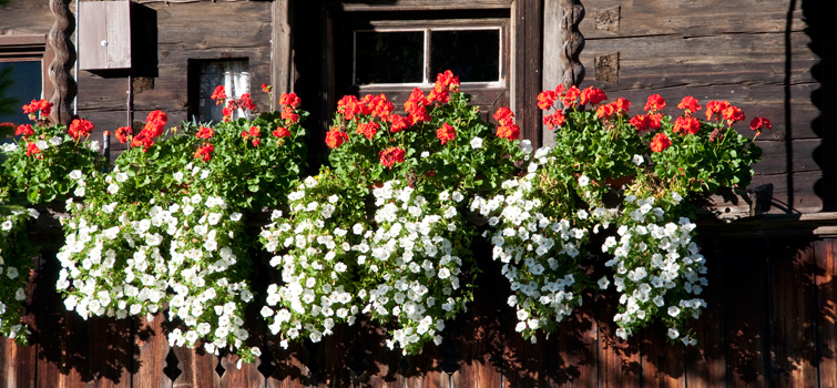 Flowers at a balcony